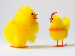 chicken-talk-2-1443909-640x480